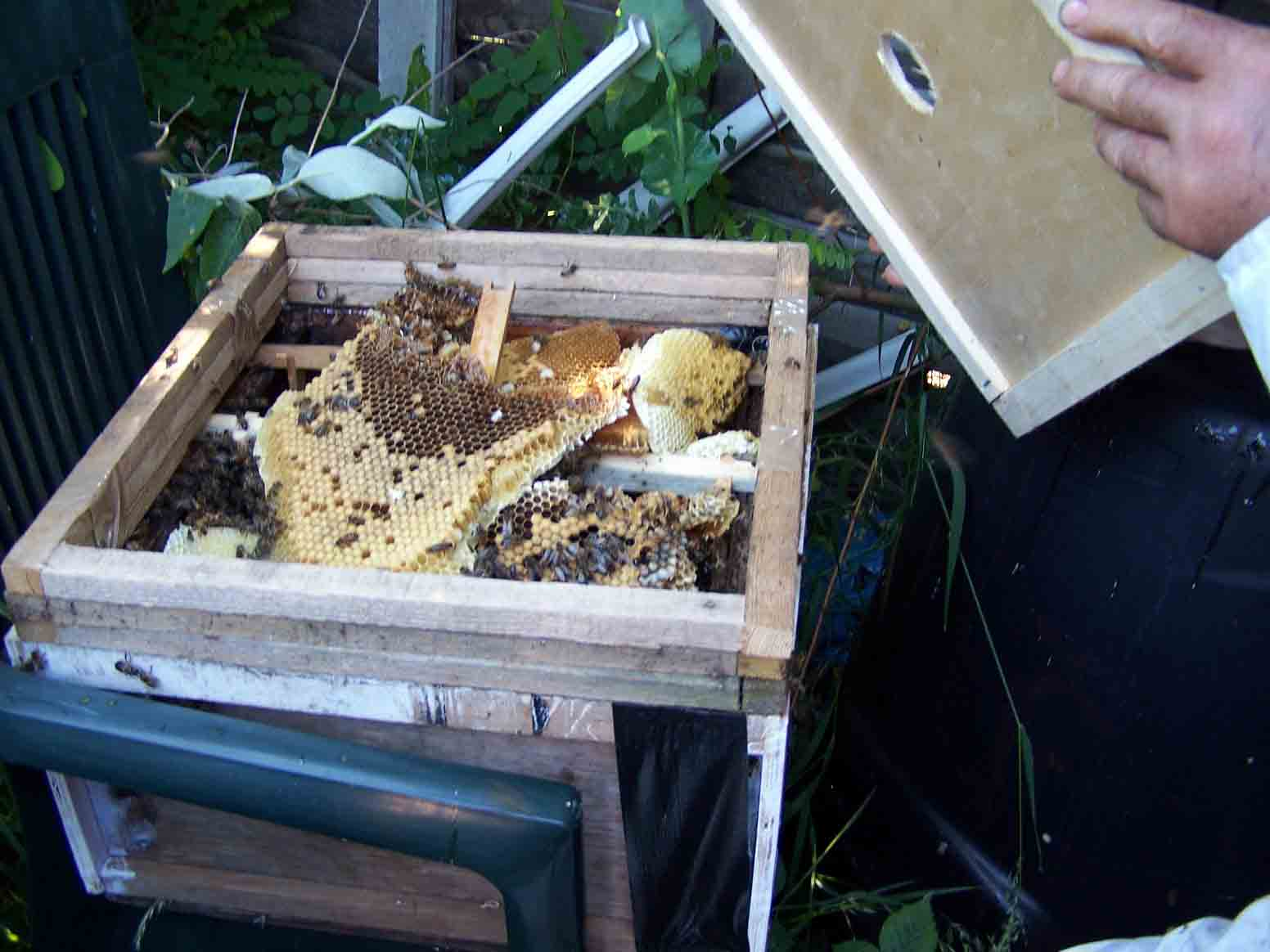 adding the comb to a brood box