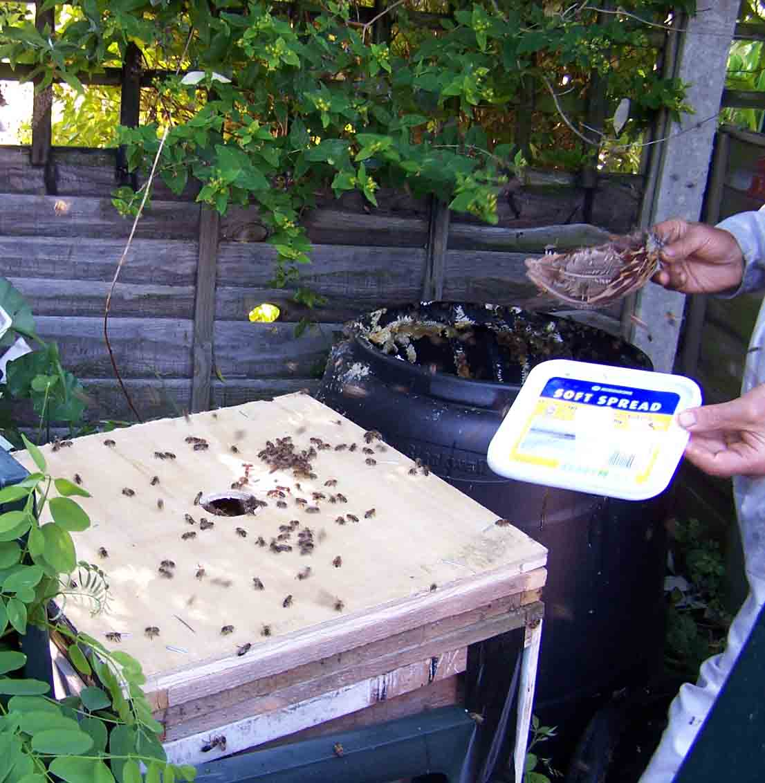 brushing loose bees on to brood box